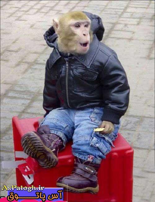 تیپ اسپرت یک میمون که نظر همه را جلب کرد!